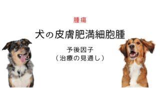 犬 皮膚肥満細胞腫