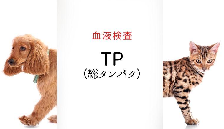 犬猫 血液検査 TP