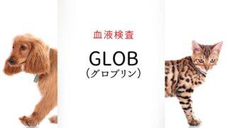 犬猫 血液検査 GLOB