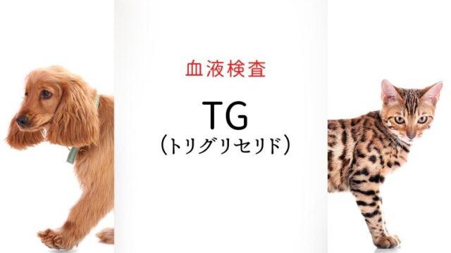 犬猫 トリグリセリド