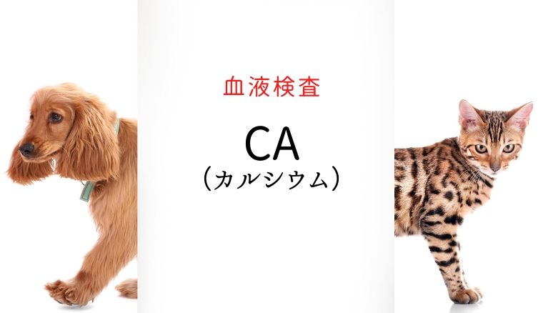 犬猫 カルシウム