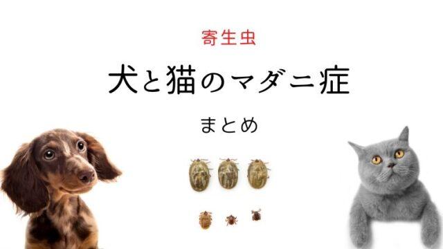 犬と猫のマダニ症