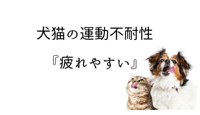 犬猫 疲れやすい