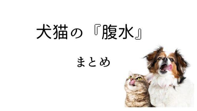 犬猫 腹水