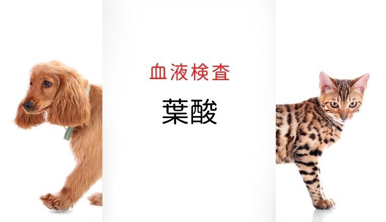 犬猫 葉酸