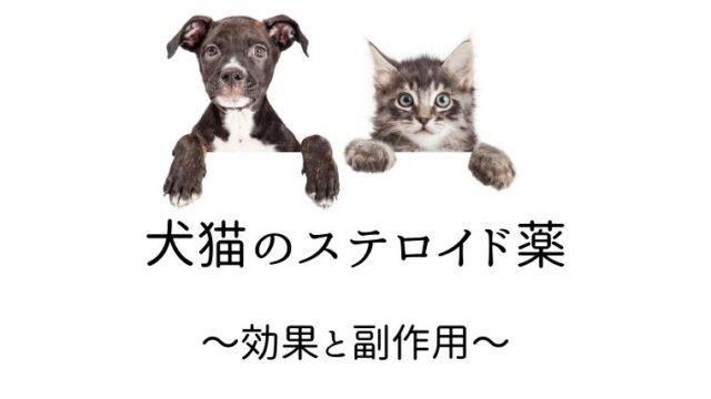 犬猫 ステロイド
