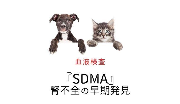 犬猫 SDMA