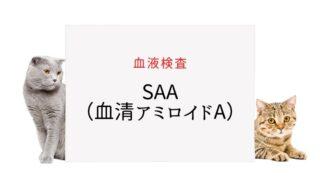 猫の血液検査 SAA