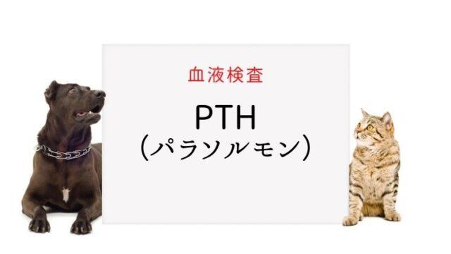 犬猫 PTH(パラソルモン)