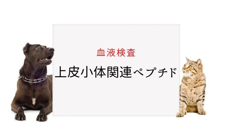 犬猫 PTHrP(上皮小体関連ペプチド)