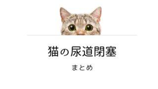 猫の尿道閉塞