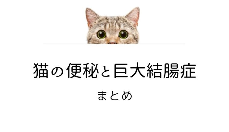 猫 便秘 巨大結腸症