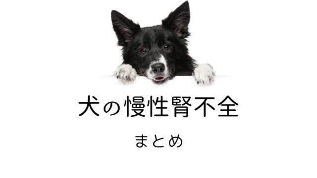 犬 慢性腎不全