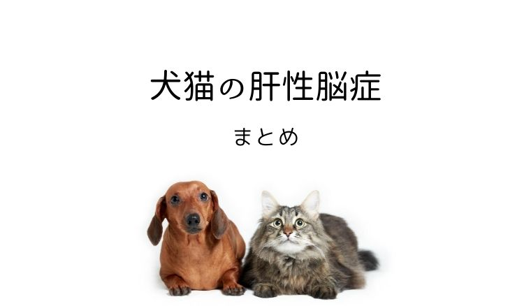 犬猫 肝性脳症